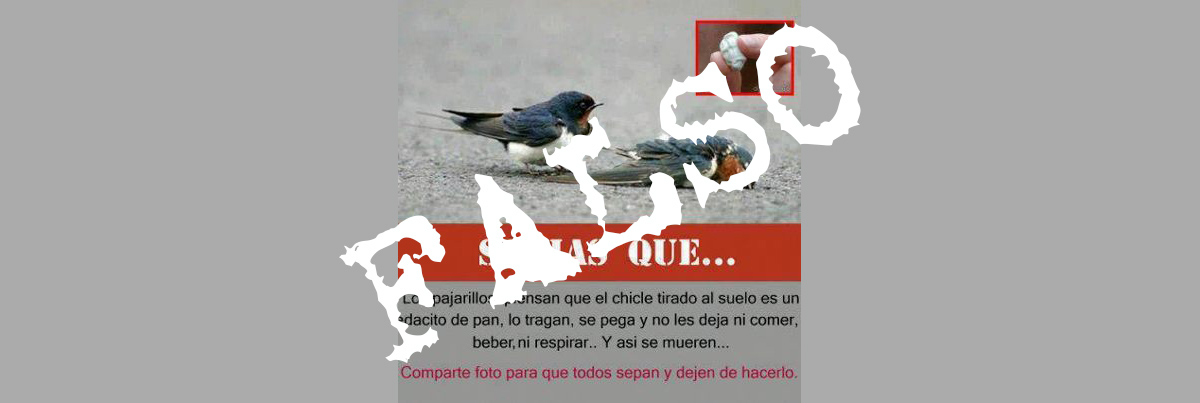pajaros y chicles bulo falso