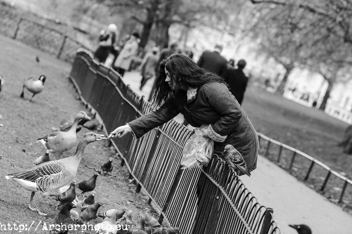 Dando de comer a los patos - Londres es una ciudad solitaria cuando eres el único surfer - Fotógrafo profesional