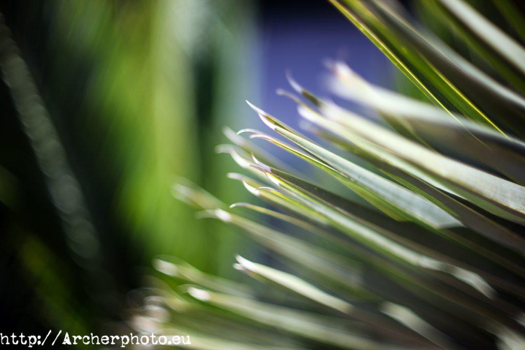 Verde, por Archerphoto, fotógrafo profesional en España