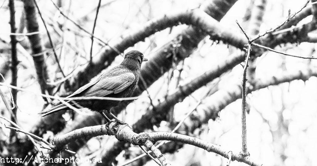Animales en el parque, Archerphoto, fotógrafo, Londres
