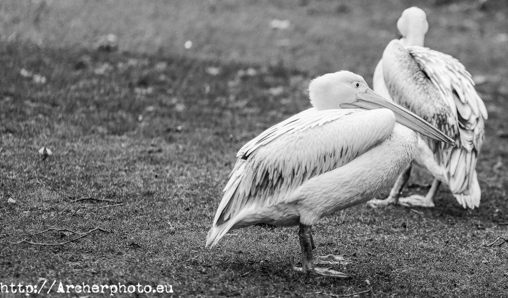 Animales en el parque, Archerphoto, fotógrafo, Sergi Albir