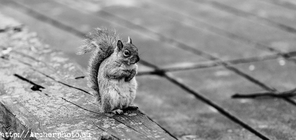 Animales en el parque, Archerphoto, fotógrafo, Londres,ardilla