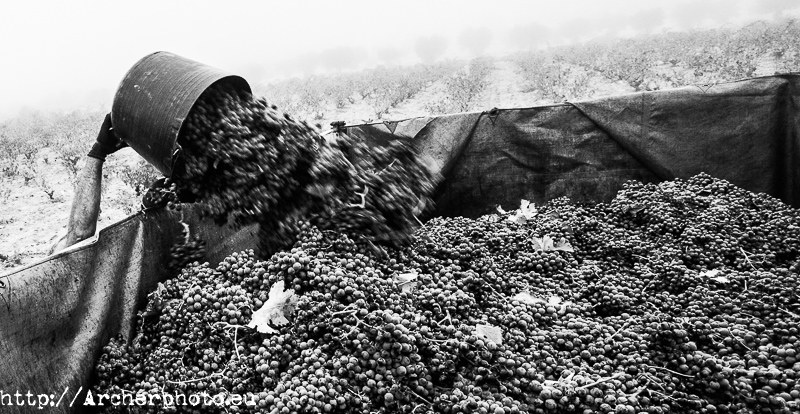 Making wine in Spain by Archerphoto, professional photographer, commercial photographer Spain