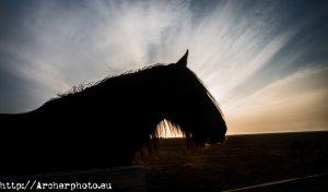 caballo,contraluz,fotografo profesional,Valencia