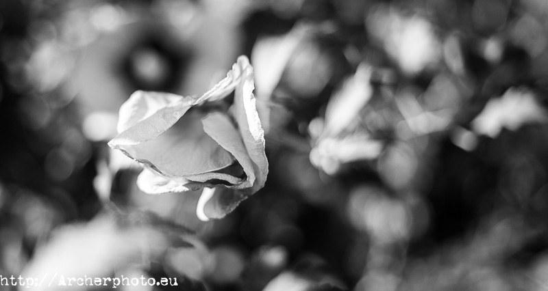 Tres visiones para la misma foto. Flor. Fotografo profesional.