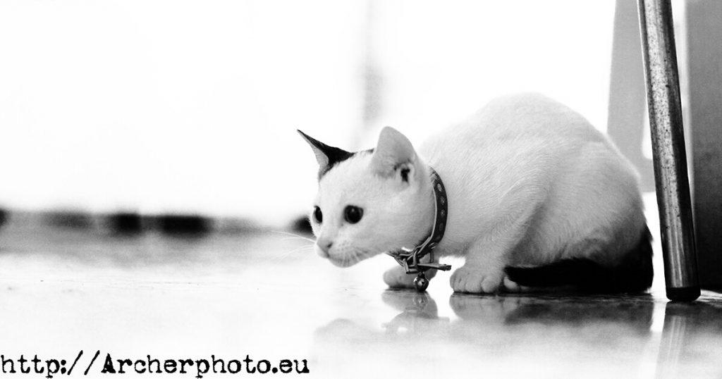 Trastito, gato. Fotografo Valencia, Archerphoto