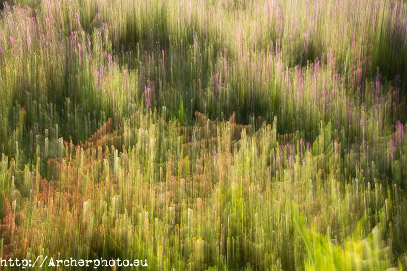 Doñana con Canon Explorer Series, por Archerphoto, fotografo profesional