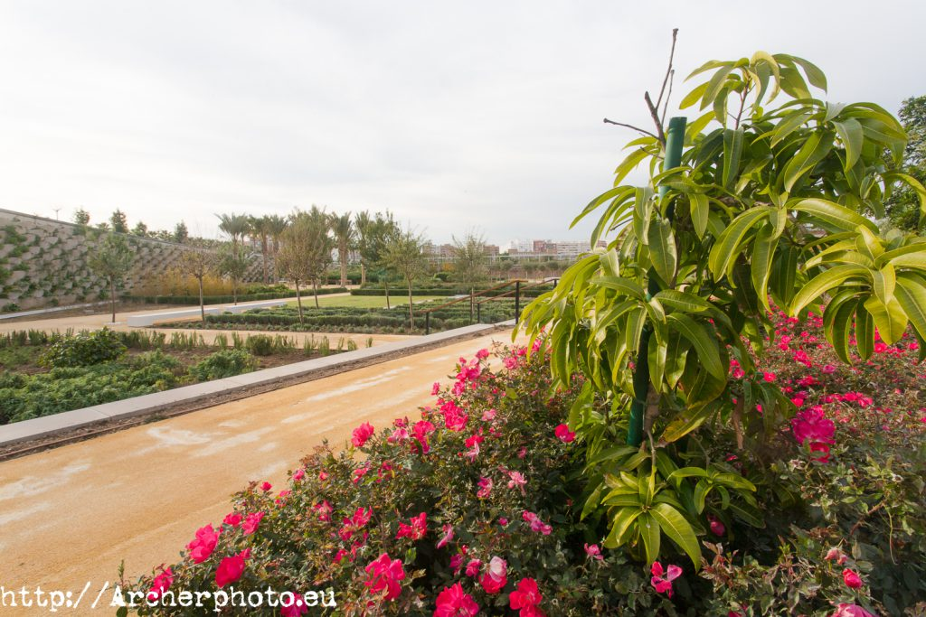 Parque Central, Valencia, por Archerphoto, posicionamiento web e imágenes