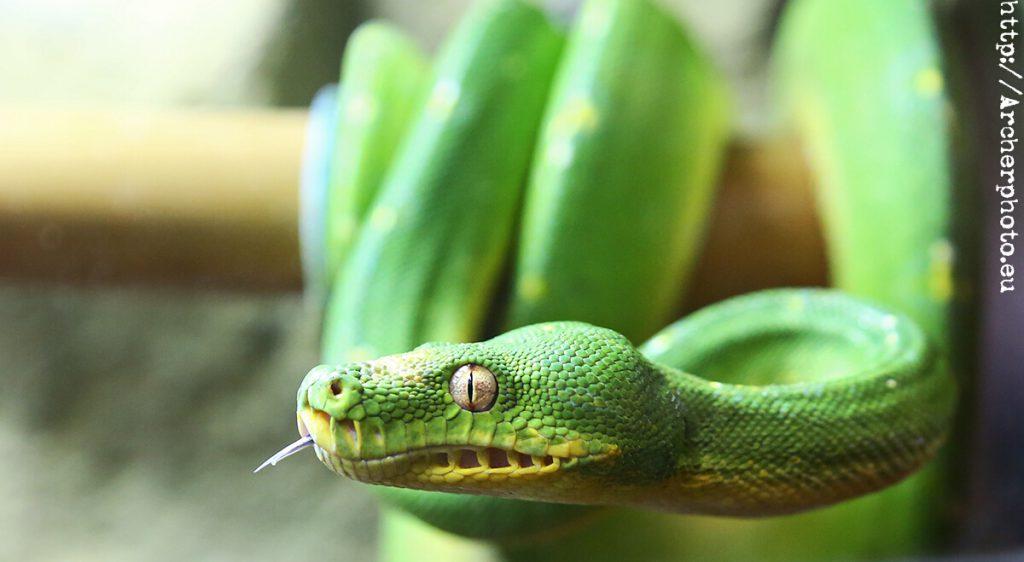 serpiente verde, Archerphoto, fotografo Valencia