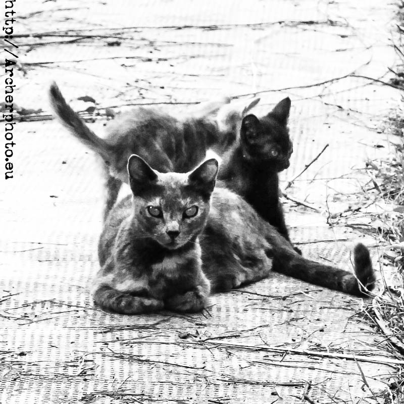gatos diabólicos
