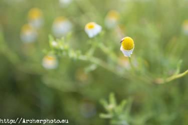 Doñana con Canon Explorer Series, foto de Archerphoto fotografo profesional, fotografía de naturaleza