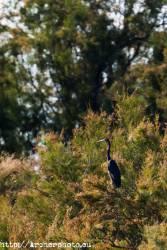 Doñana con Canon Explorer Series, foto de Archerphoto fotografo profesional